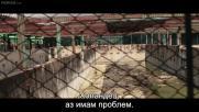 Английски кучета в Банкок (2020)